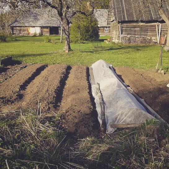 aiamaa algus 2015